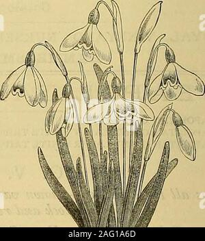 . The Gardeners' chronicle : a weekly illustrated journal of horticulture and allied subjects. - Stock Photo