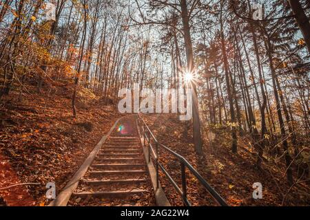 Path in natural park with autumn trees. Sunny autumn picturesque forest landscape with sunlight. Fall trees with colorful leaves background. Tree with - Stock Photo