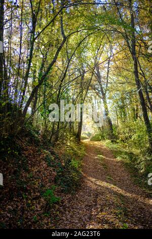 Autumn seasonal landscape on an off road path covered with many brown leaves in a green forest on a sunny day - Stock Photo