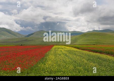 summer bloom in castelluccio di norcia - Stock Photo