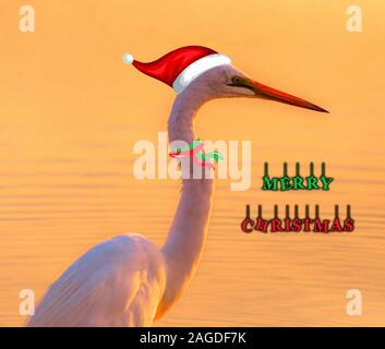 An illustration of a white swan with a holiday hat and a Merry Christmas print - Stock Photo