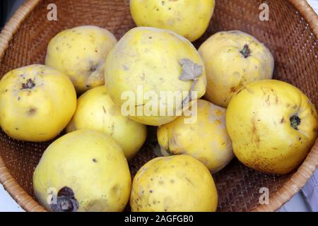 Fresh organic quince fruits in knitted basket. Quince Fruit pattern. - Stock Photo
