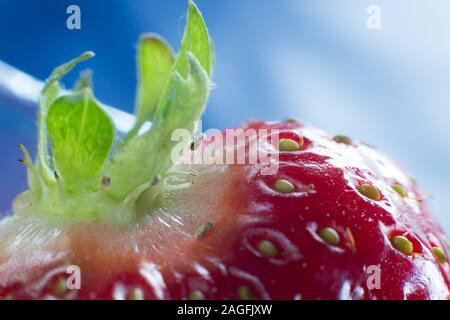 Strawberries. Strawberry close-ups. - Stock Photo