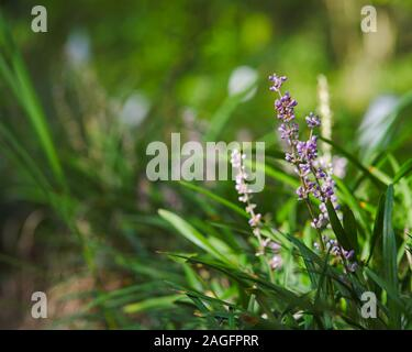 Selective focus shot of a branch of an unbloomed broomrapes flower among the green grass