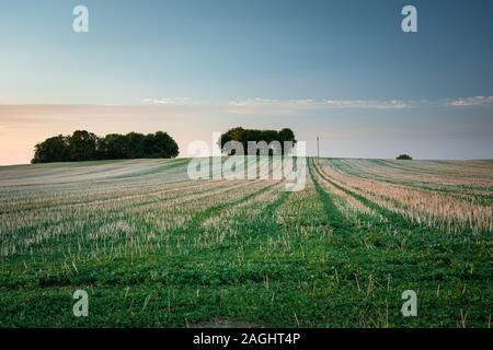 Mown field, trees on the horizon and sky, summer evening view - Stock Photo
