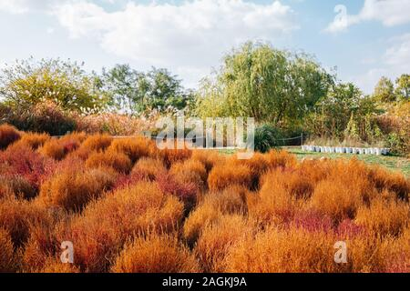 Autumn dry summer cypress field at Sky park in Seoul, Korea - Stock Photo
