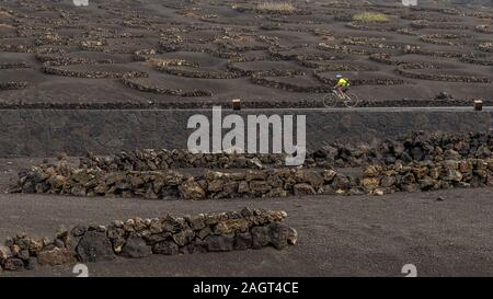 A cyclist travels the road through the vineyards on the volcanic soil of La Geria, Lanzarote, Canary Islands, Spain - Stock Photo