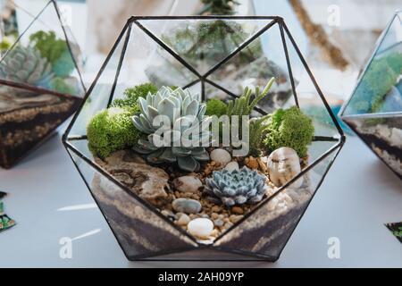 Miniature Succulent Plants in transparent pots standing on a transparent table. - Stock Photo