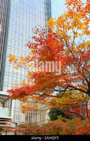 Autumn foliage in Tokyo city - maple tree orange leaves and office buildings of Tokyo Midtown district. - Stock Photo