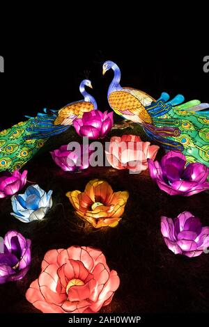 Warsaw, Poland - December 16, 2019: Peacock couple in love and blossoming flowers illuminated at night at Chinese Light Festival at Fort Bema - Stock Photo