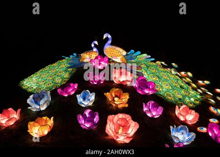 Warsaw, Poland - December 16, 2019: Peacock couple in love and blooming flowers, night illumination at Chinese Light Festival at Fort Bema - Stock Photo