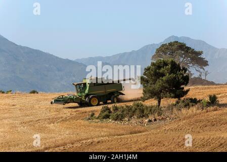 Caledon, Western Cape, South Africa. December 2019. Combine harvester machine working in the wheatlands region near Caledon, Western Cape.