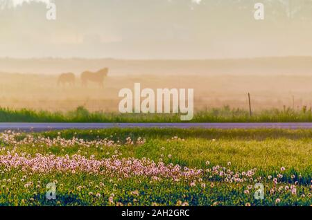 Early morning sun illuminates the mist in the air and the dew drops on the ground. A silhouette of two horses grazing on a hazy pasture/meadow is seen. - Stock Photo
