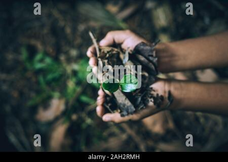 Boy hands holding young trees for planting to reduce global warming, Forest conservation