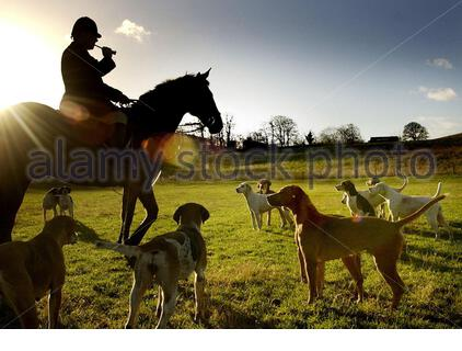 EMBARGOED TO 0001 THURSDAY DECEMBER 26 File photo dated 15/12/04 of hounds being called for the start of the Buccleuch hunt as leading animal rights group The League Against Cruel Sport have released findings that nearly 90% of people in Scotland support a ban on fox hunting. - Stock Photo