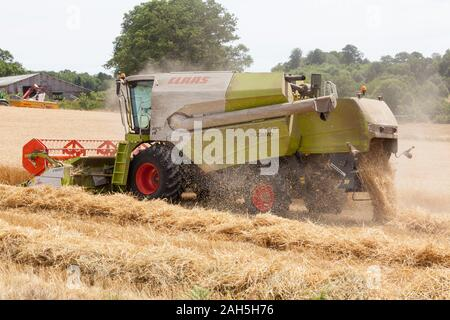 Claas 440 Tucano Combine Harvester with Claas V600 Cutter bar  harvesting field of wheat  grown for  winter livestock feed on a dairy farm. - Stock Photo
