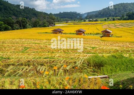 After harvested rice terraces in sunny day with three wooden cottages in rural in Chiangmai, Thailand - Stock Photo