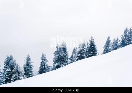 Simple white winter background with forest on a hill covered with snow. A line of snowy fir trees situated diagonally. Copy-space - Stock Photo