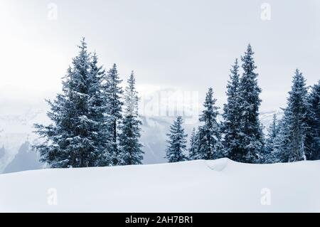 White winter landscape with snow, fir trees, foggy mountains and overcast sky with low clouds in Schmittenhohe near Zell am See Kaprun ski resort in A - Stock Photo
