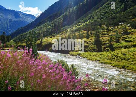 Mountain flowers and river. Rainbachtal. Alpine landscape, a side valley of the Krimmler Achental. Hohe Tauern National Park. Austrian Alps. - Stock Photo