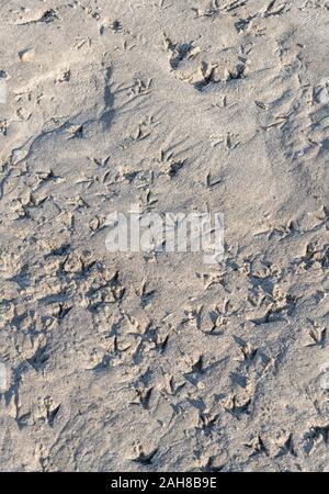 Abstract bird footprints tracks in wet sandy beach. Birdlife metaphor, signs of activity. - Stock Photo