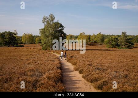 14.10.2019, Haltern am See, North Rhine-Westphalia, Germany - Westruper Heide, a young couple with dogs walk hand in hand on a path through the heath. - Stock Photo