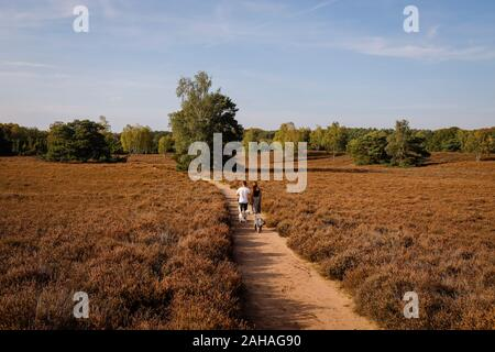 14.10.2019, Haltern am See, North Rhine-Westphalia, Germany - Westruper Heide, a young couple with dogs walks hand in hand on a path through the heath - Stock Photo