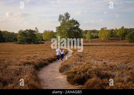 14.10.2019, Haltern am See, North Rhine-Westphalia, Germany - Westruper Heide, a young couple with a dog walks hand in hand on a path through the heat - Stock Photo