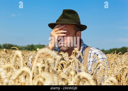 Bauer begutachtet sein Getreide und ist entsetzt, schlechte Ernte droht - Stock Photo