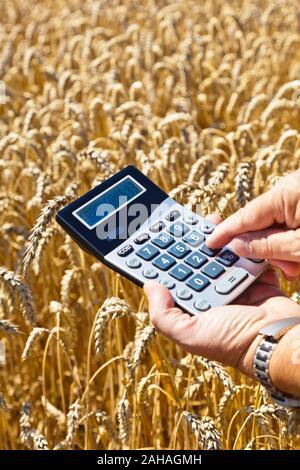Bauer begutachtet sein Getreide, Taschenrechner, Rendite, - Stock Photo
