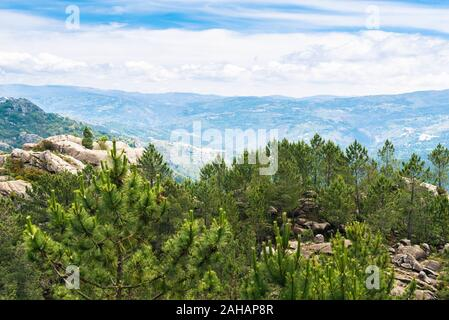 Mountain Forest With Evergreen Trees In Fog Mist Landscape in Portugal Peneda Geres park - Stock Photo