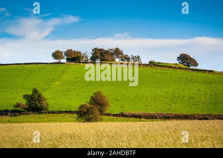 English field in midsummer with blue sky, green grass and trees on the summit of a small hill. - Stock Photo