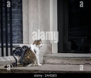 Larry the Downing Street Cat, Chief Mouser, sits outside the door to No 10, London, UK - Stock Photo