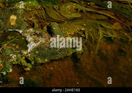Swirling patterns of foam on the surface of a stream in bright sunshine with water weeds forming contrasting swirls beneath