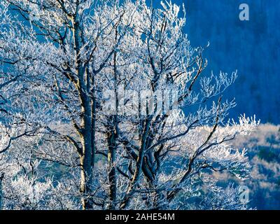 Early Winter snow on trees scenery - Stock Photo