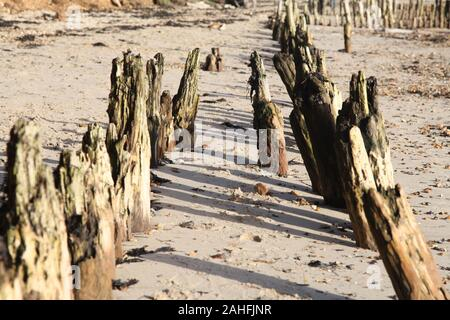 Lines of wooden posts 'groynes' long rotten by the sea, on Lepe Beach, Southampton, Hampshire, UK, 2019 - Stock Photo