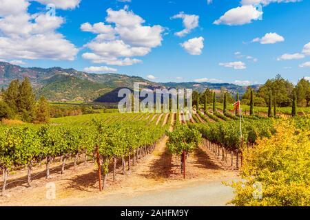 Vineyards in Napa Valley California USA