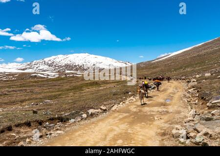 Deosai National Park Picturesque View of Nomads Walking with their Loaded Horses and Donkey to another Place on a Sunny Blue Sky Day - Stock Photo