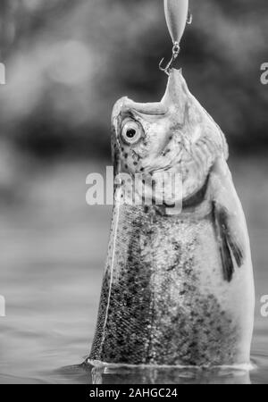 fish on hook. trout bait. catch fish. fishing on lake. hobby and sport activity. good catch. fly fishing trout. recreation and leisure. stalemate and hopelessness. fall into trap. Ready for fishing. - Stock Photo