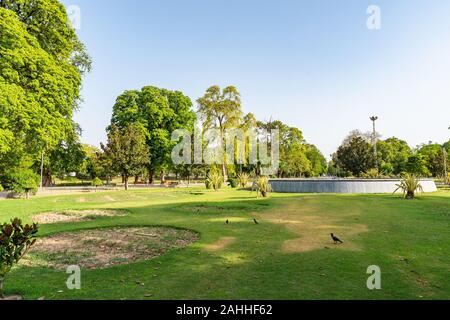 Lahore Bagh-e-Jinnah Park Picturesque View of Grass and Palm Trees on a Sunny Blue Sky Day - Stock Photo