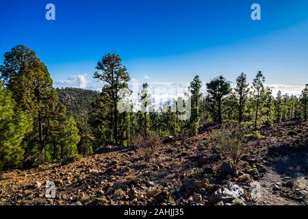 Spain, Tenerife, Wide view above volcanic lava nature landscape of the island, covered by green conifer trees above the clouds in the mountains - Stock Photo