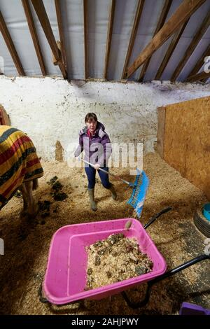 A young woman cleaning or mucking out a horse stable. - Stock Photo