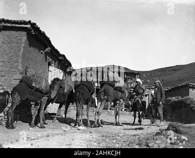 A small caravan of 4 camels packed with goods moving through a small mountain village in the western part of Ottoman Turkey. A man in traditional dress sitting on an donkey and another man standing accompanied by a boy and watching the beasts passing by. Photograph taken around 1910-1920. Copy from a dry glass plate, originating from the Herry W. Schaefer collection. - Stock Photo