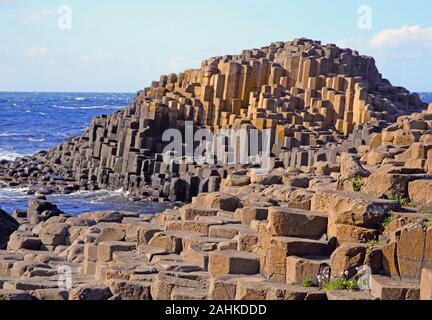 Basalt columns and stepping stones of Giant's Causeway with pink thrift flowers growing in the cracks forming the coastline, Giant's Causeway, County