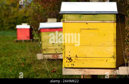Colorful bee boxes stand on a meadow in autumn on a sunny day and the bees fly around the boxes