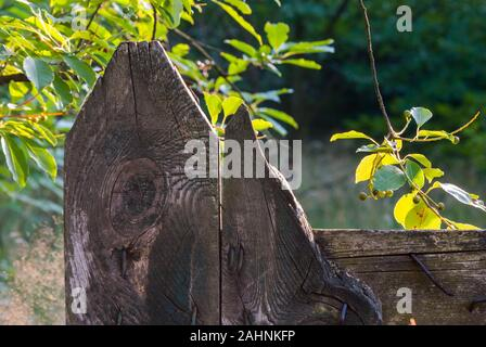 Fragment of an old wooden fence in the garden - Stock Photo