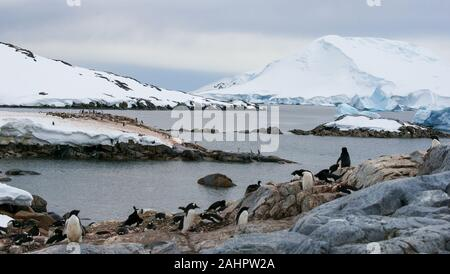 Petermann Island, Antarctica,  Gentoo and Adélie penguins nesting along the shore. - Stock Photo