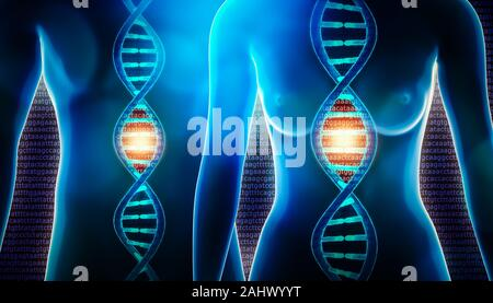 Human dna strands double helix and female and male body 3d rendering illustration. Science, medicine, physiology, genetics, genome, sequencing, biolog