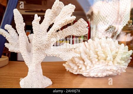 A display of white coral in a restaurant window, bright with early morning light - Stock Photo