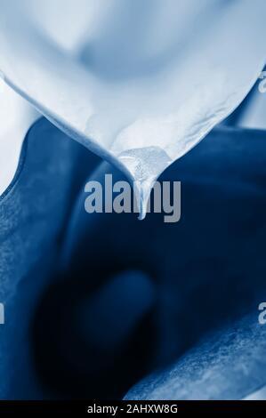 Macro of two calla flowers - Stock Photo